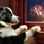 dog-fireworks-300x193